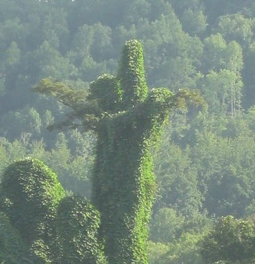 Jesus in the Kudzu